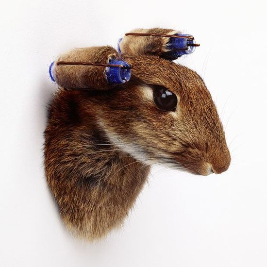 Rabbit with Curlers