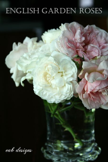 English garden roses look so beautiful!