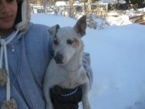 • Prefers a home without: cats, dogs •  URGENT! Jack JRT is an adoptable Jack Russell Terrier Dog in Norwalk, CT. Urgent! Dogs & Cats in danger! August 1, 2011 The SPCA must find homes for 29 dogs & 29 cats in 29 days. To help make this hap...