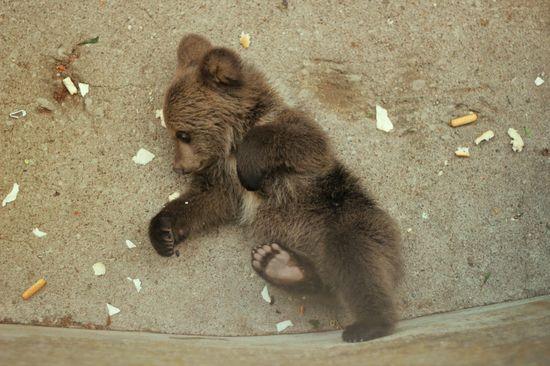 Baby Bear Sleeping! - Imgur