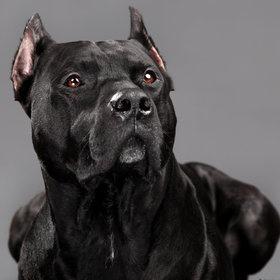 Angelo, Envy's doggy[[Irina Vasilevitskaya]]