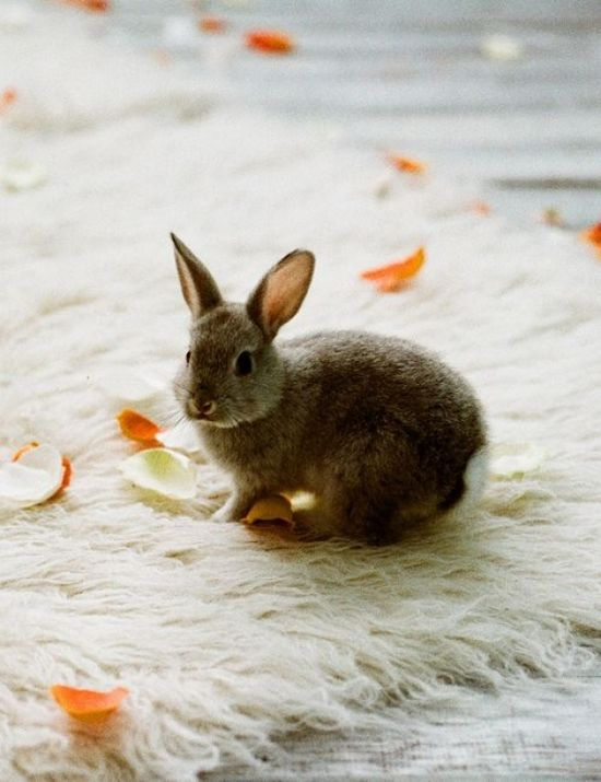A Bunny Tail