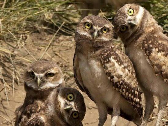I love me some owls!