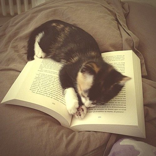 #Cat & #book