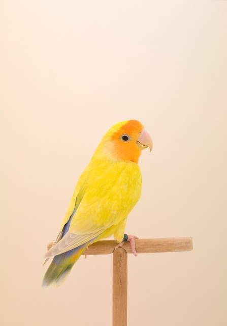 THIS IS A HAPPY BIRD /// The Incomplete Dictionary of Show Birds photographed by Luke Stephenson