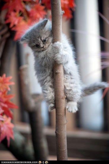 ? kittens