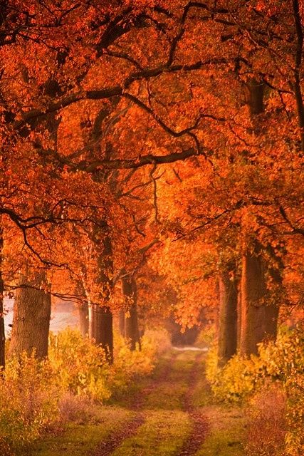Autumn path beneath the trees