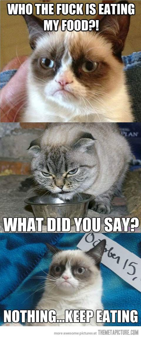 Who's eating Grumpy Cat's food