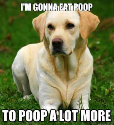 """""""Dog Logic"""" is a meme's best friend!"""