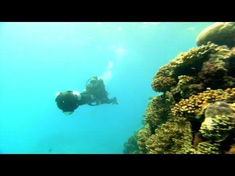 Google+: Catlin Seaview Survey Underwater Hangouts: Go on a virtual dive! #Google_+ #Caitlin_Seaview_Survey #The_Great_Barrier_Reef