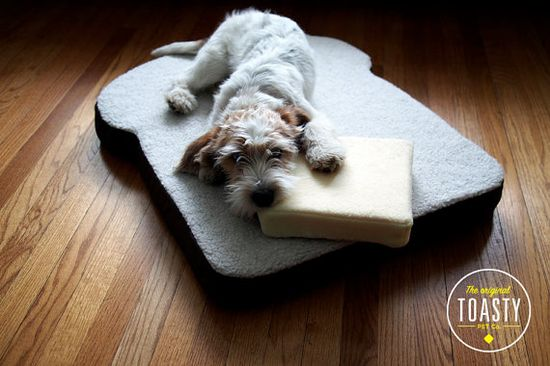 The original Toasty Pet Bed - Toast-shaped dog or cat bed. Looks like a PBGV :)