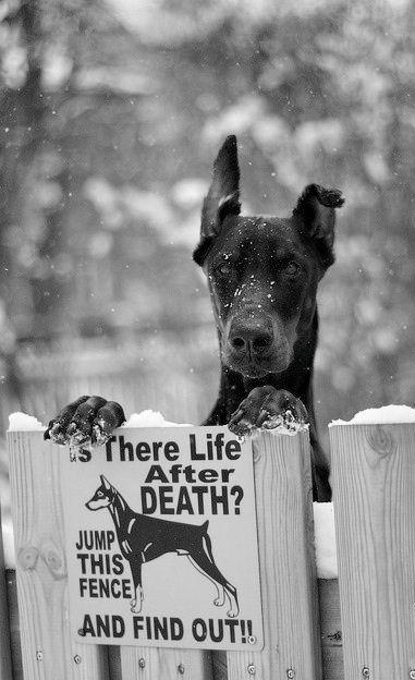 Nice doggie......