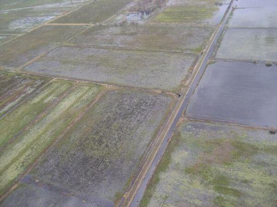 Flooded farmland on