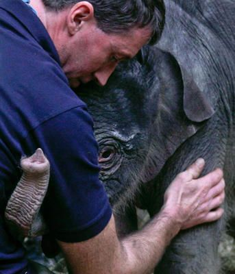 Hug by Michael Daider/Reuters via csmonitor: A 2-day-old baby elephant cuddles with a zookeeper at Munich's Hellabrunn Zoo on Dec. 23, 2009. #Elephant