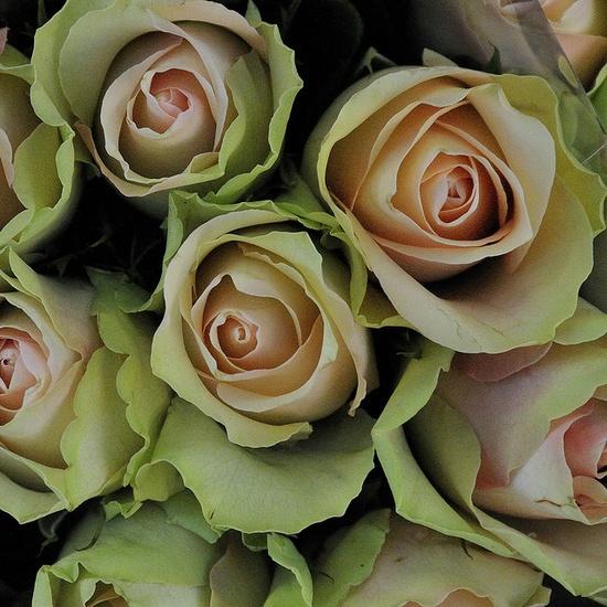 (O))) green roses