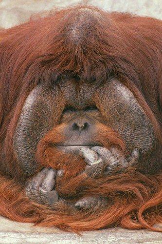 ~~orangutan ~ hands ~~