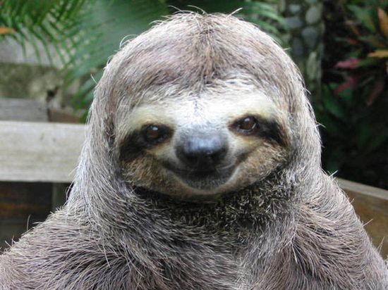 This Sloth seems too happy!