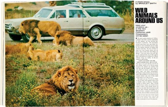 The San Diego Zoo's Wild Animal Park, AUGUST 1971