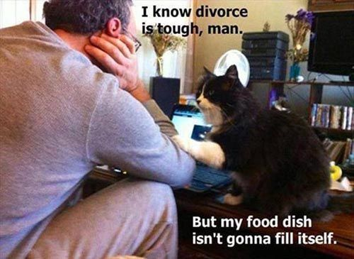 funny cat #funiest cat scares