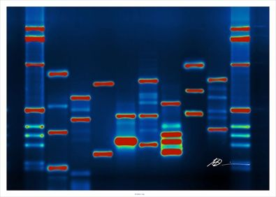 Most Mutations in the Human Genome are Recent and Probably Harmful. From an estimated 5 million individuals just 10,000 years ago, we ballooned to more than 7 billion. On average, every duplication of the human genome includes 100 new errors, so all that reproducing gave our DNA many opportunities to accumulate mutations. But evolution hasn't had enough time to weed out the dangerous ones: gene variants that might make us prone to illness, or simply less likely to survive.