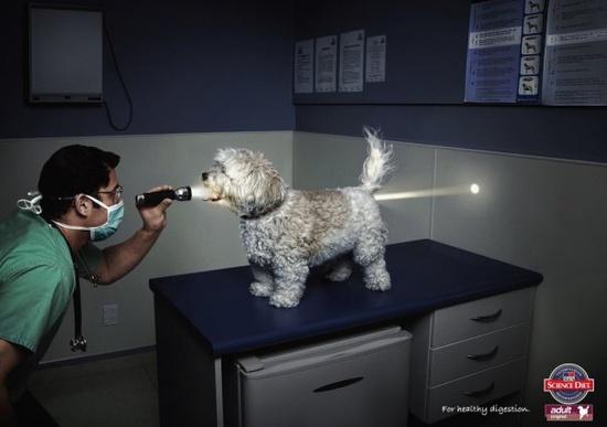 Science Diet. Best ad