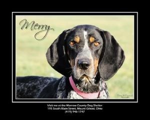 OHIO ~ URG'T ~ meet Merry an #adoptable #BluetickCoonhound Dog in Mount Gilead. Merry arrived as a stray after she showed up at someones house.  She's approx 4 yrs old, very sweet, gentle, & good with other dogs.  She's a little fearful at the shelter. Merry is ok on leash. She's available immediately to an approved rescue.  All #adopters must complete an app before #adoption can take place. Morrow County Dog Shelter, Mount Gilead, OH  419-946-1747 &/OR mailto:morrowdogw... -pin 12/29