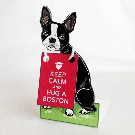 Hug a BOSTON!!