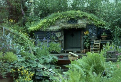 Tiny cottage tucked into forest