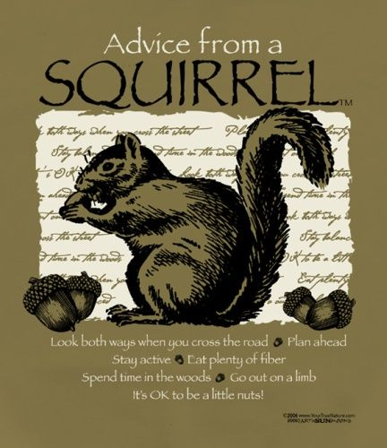 Advice from a Squirrel...These would be neat to put up around camp.