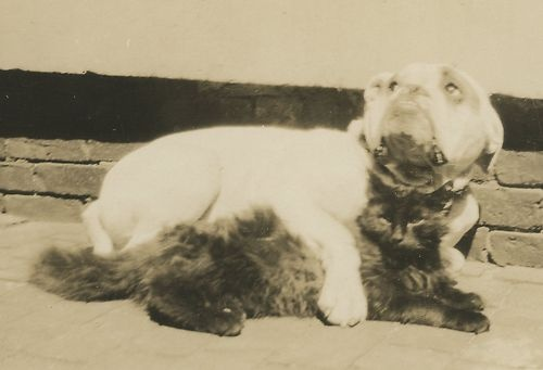They were the best of vintage friends. #cute #pets #animals #cats #dogs #bulldogs