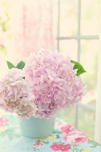 Pink hydrangeas...