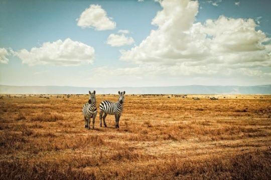 Wilderness: Amazing Animal Photography Showcase  Tanzania / Botswana ~ Africa by Justin Carrasquillo