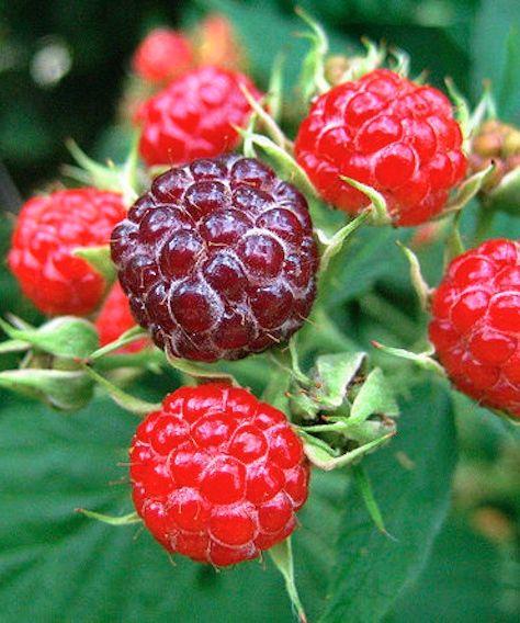 4 Flavorful & Fresh Fruit Freezes!!!!
