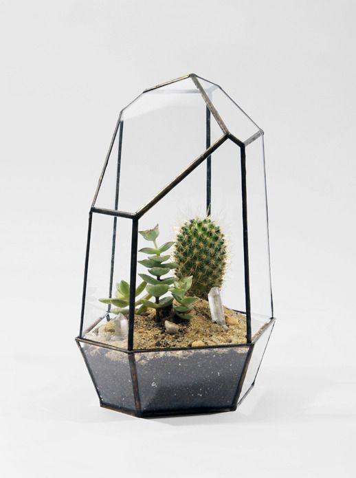 Indoor gardening with terrariums