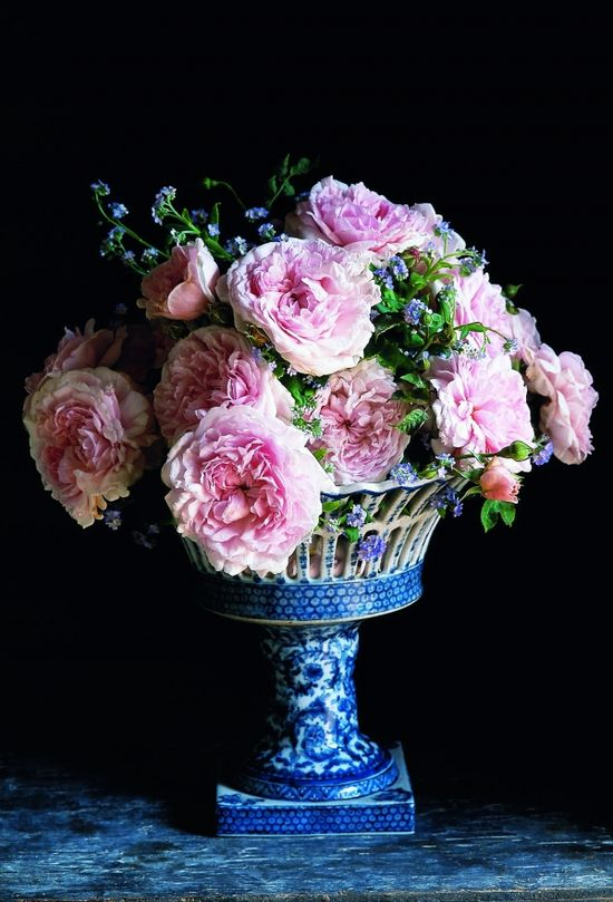 Ping English roses in blue and white container.