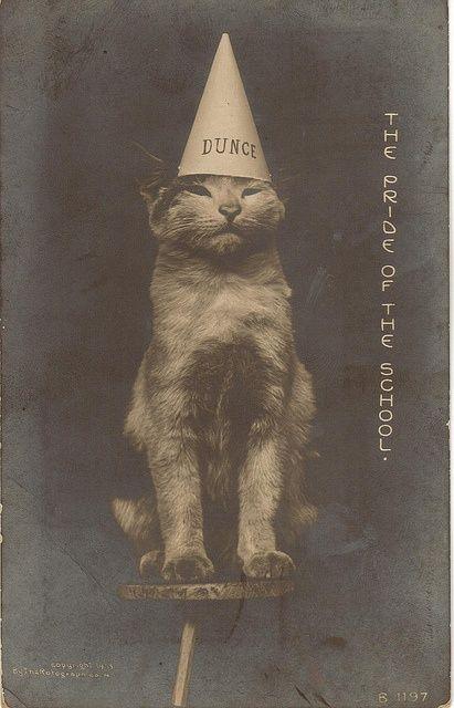 vintage cat, possibly Pointer's #pet girl