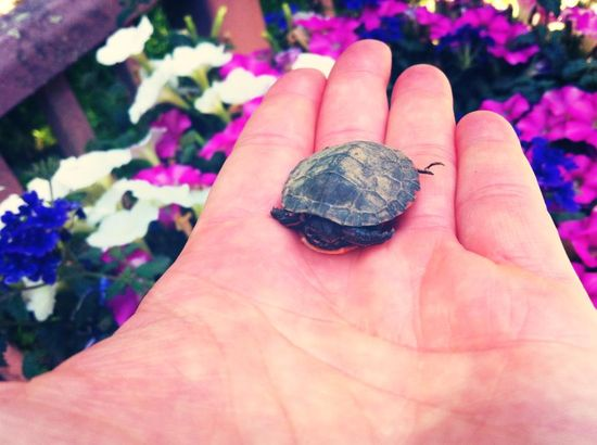More Baby Animals ~ This Time a Turtle