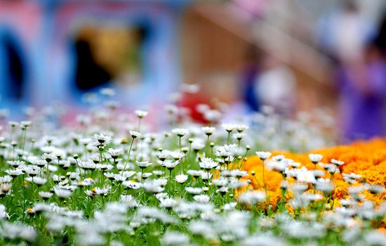 Flower garden @ everland.korea     nice