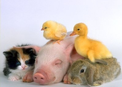 In my dream house, all these animals would live with me. And stay babies forever (and not poop in the house =\)