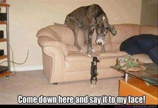 """Say it!!"" #dog"