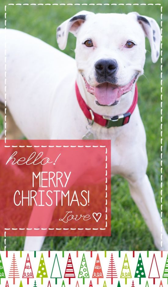 cute pet holiday card for christmas with puppy