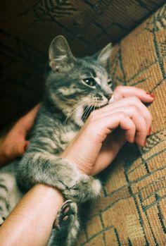 Cute Pets Now