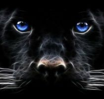 picturefordesktop... Tags: animal, animals, animation, big, cat, desktop, for, free, hd, images, pictures, wallpaper