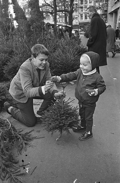 Buying a little Christmas tree