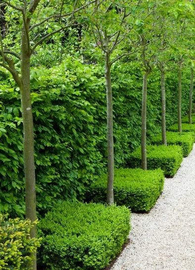 Down a green pathway!