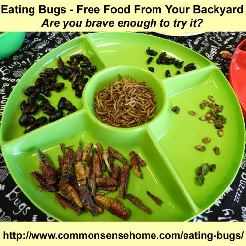 """Eating Bugs - Free Food from Your Backyard. This inspires me to throw a """"backyard bbq"""" :)"""