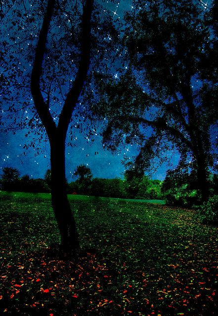 Starry night with trees
