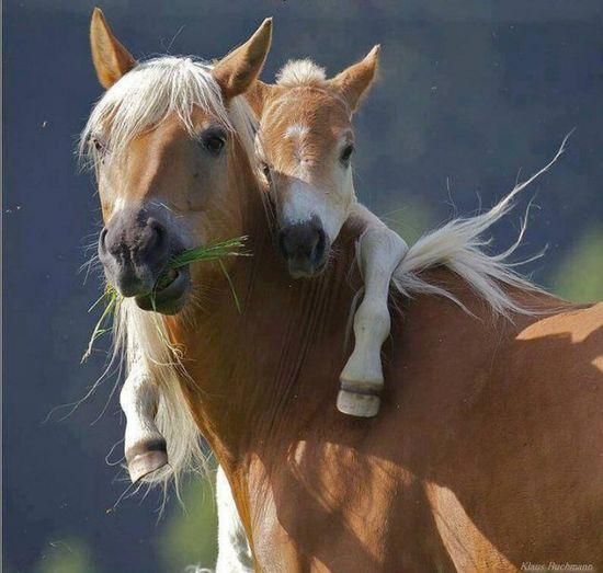 Baby Horse and Mother - 38 Cute Baby Animals