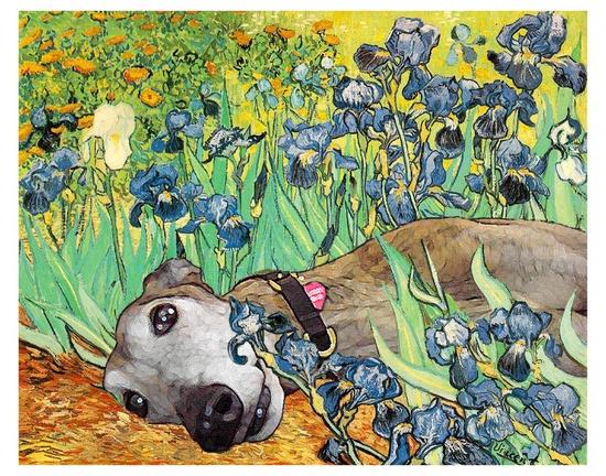 "Greyhound Art Print - ""Irises"".  via Etsy."
