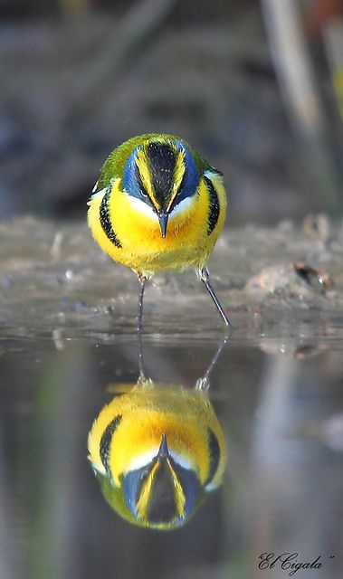 Reflection... #birds